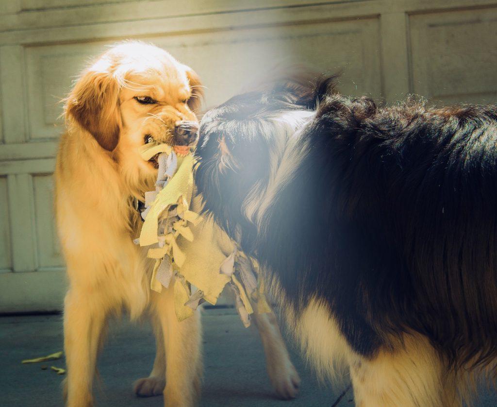 狂犬の画像